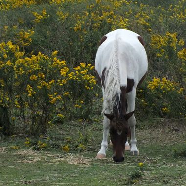 Pony 2 Color