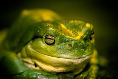 Frog Eye
