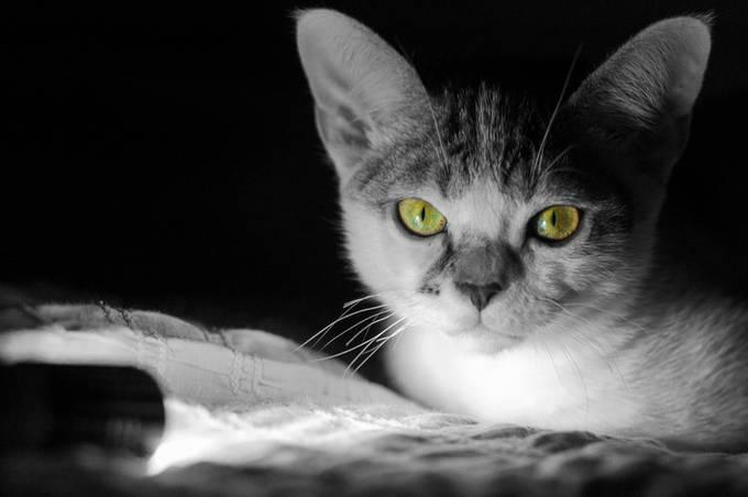 Atticus 2 by ventenni - Cute Kittens Photo Contest