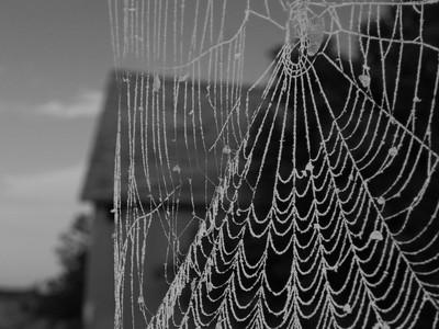 Cob web.