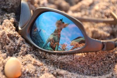 Bug on the Beach