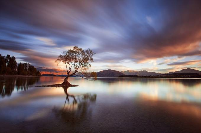 One Calm Tree by RobJDickinson - Unforgettable Landscapes Photo Contest by Zenfolio