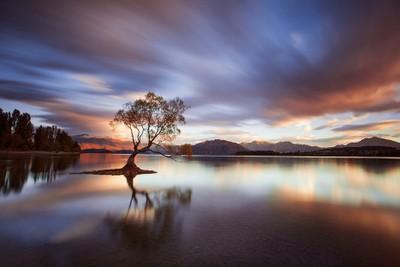 One Calm Tree