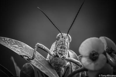 grasshopper_08