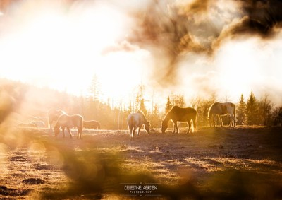 Golden hour and a herd of horses