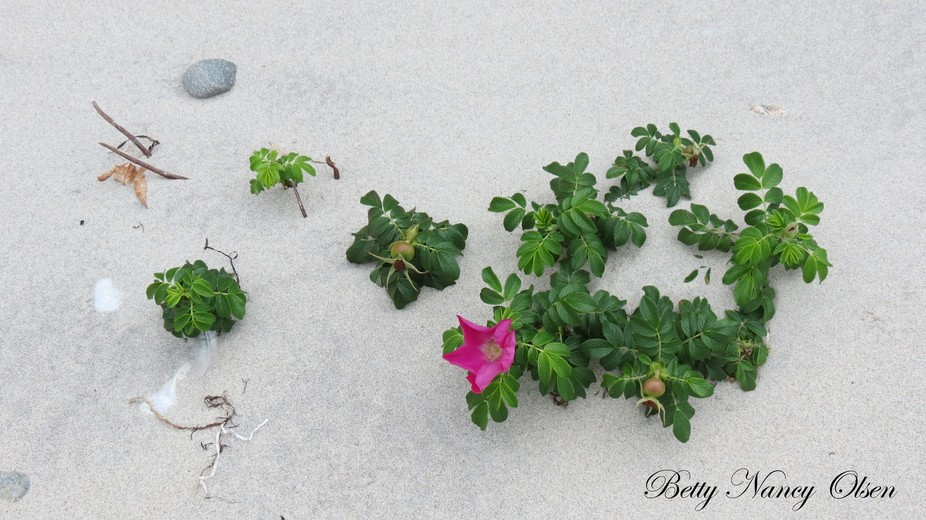 Wild flowers in the sand on the beach