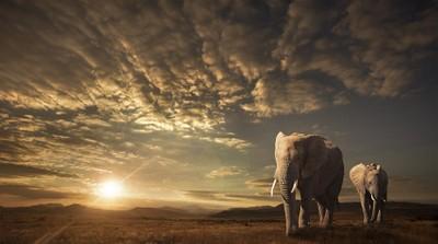 Exotic Wildlife Photo Contest Winners