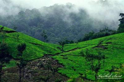 Greeny Landscape @ Valparai
