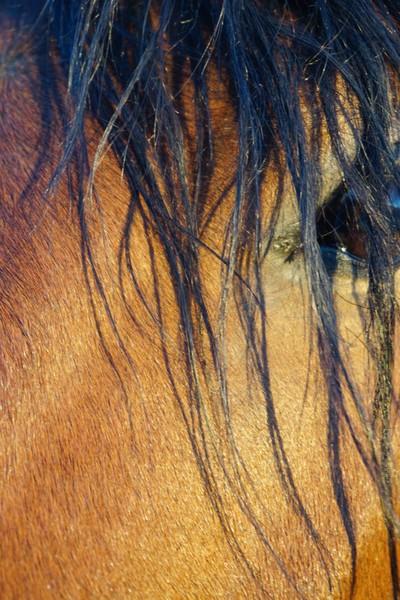 Minimalist Portrait of Bay Horse un-edited