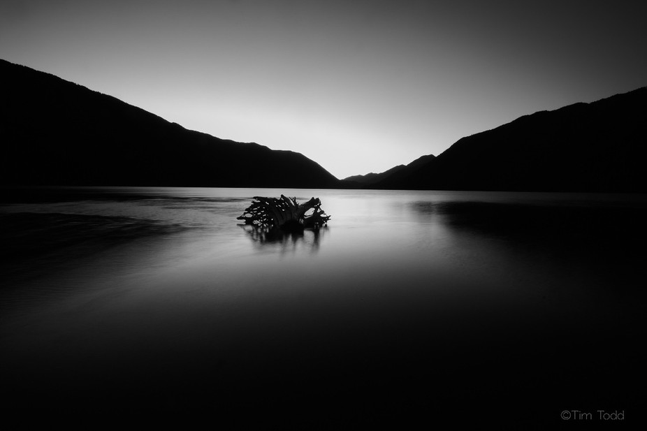 Stump in Lake Crescent appears as a water dragon watching the darkness slowly approach.