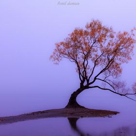 The famous tree of Lake Wanaka, New Zealand on a misty autumn morning. Feel free to follow me on FB @ http://tinyurl.com/qdkha92