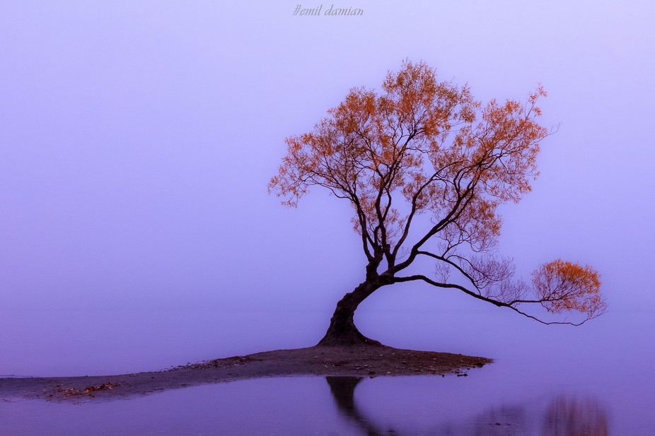 The famous tree of Lake Wanaka, New Zealand on a misty autumn morning. Feel free to follow me on ...