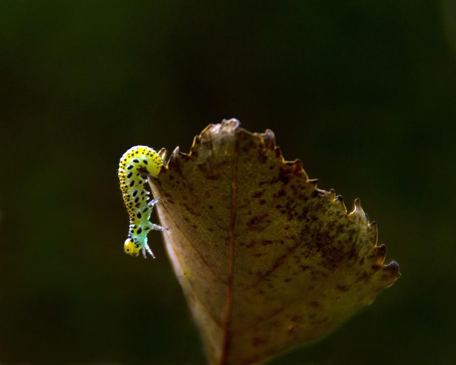 Beautiful caterpillar