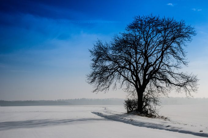 Skyblue by jonpertwee - A Lonely Tree Photo Contest