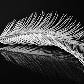 Sago palm leaf with a reflection.