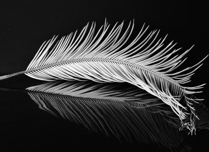 Relic of icarus by adesign high contrast in black and white photo contest