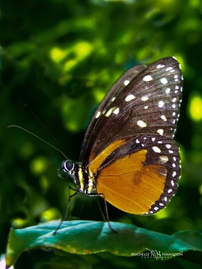 Butterfly Close-up