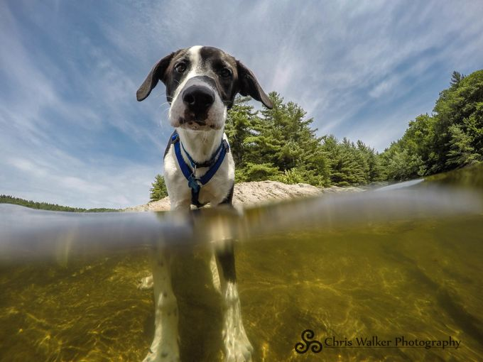 Loki by CW_Photography - Get Wet Photo Contest