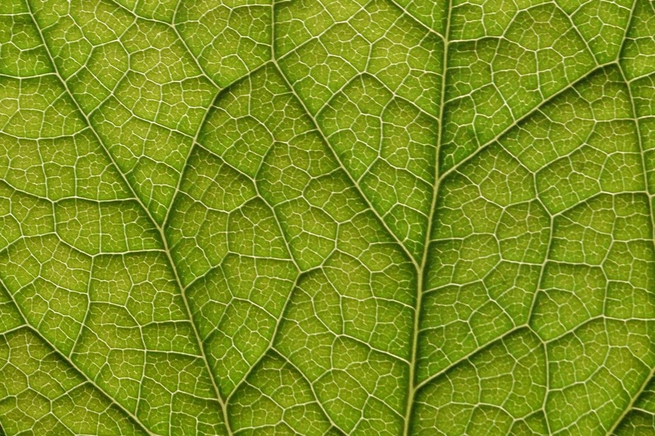 A simple leaf is quite complicated when you look close enough.