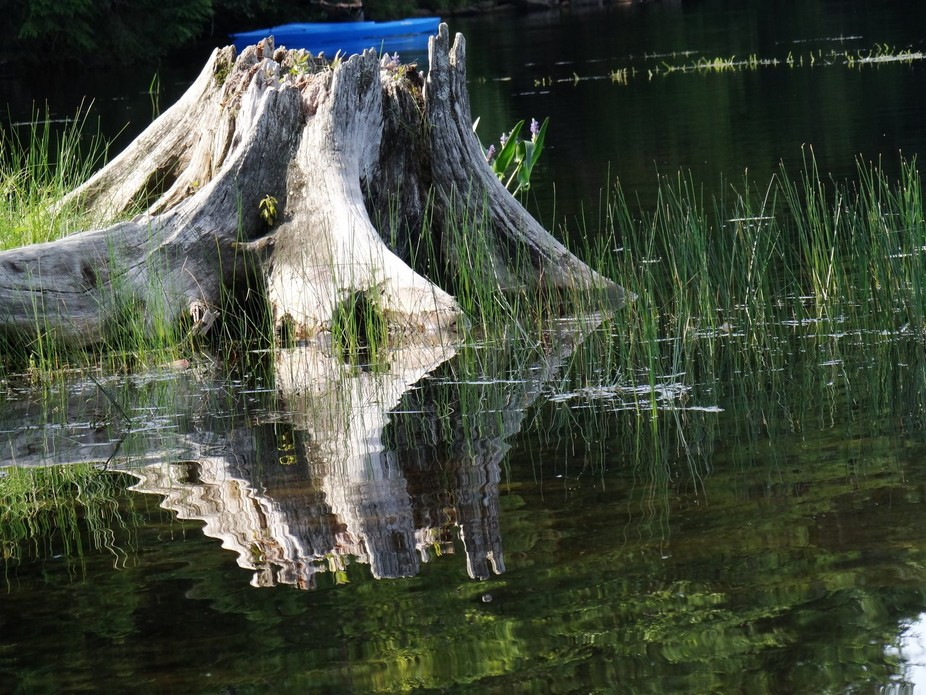 reflections of the stump in the water and a boat behind it