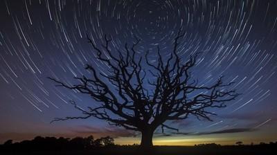 Stars Around the Secret Tree