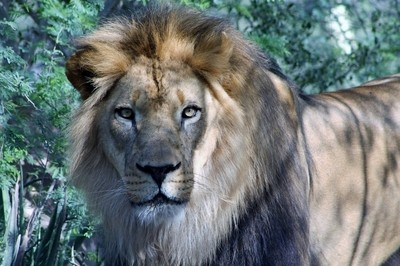 Royalty of the Jungle -
