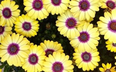 Bursting Colours