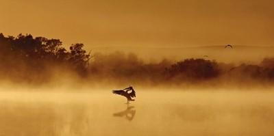 Pelican Salute