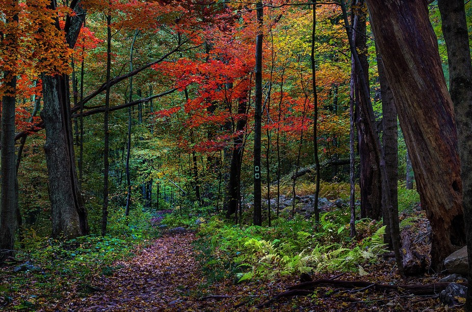 At Stoke state forest, New Jersey during foliage...