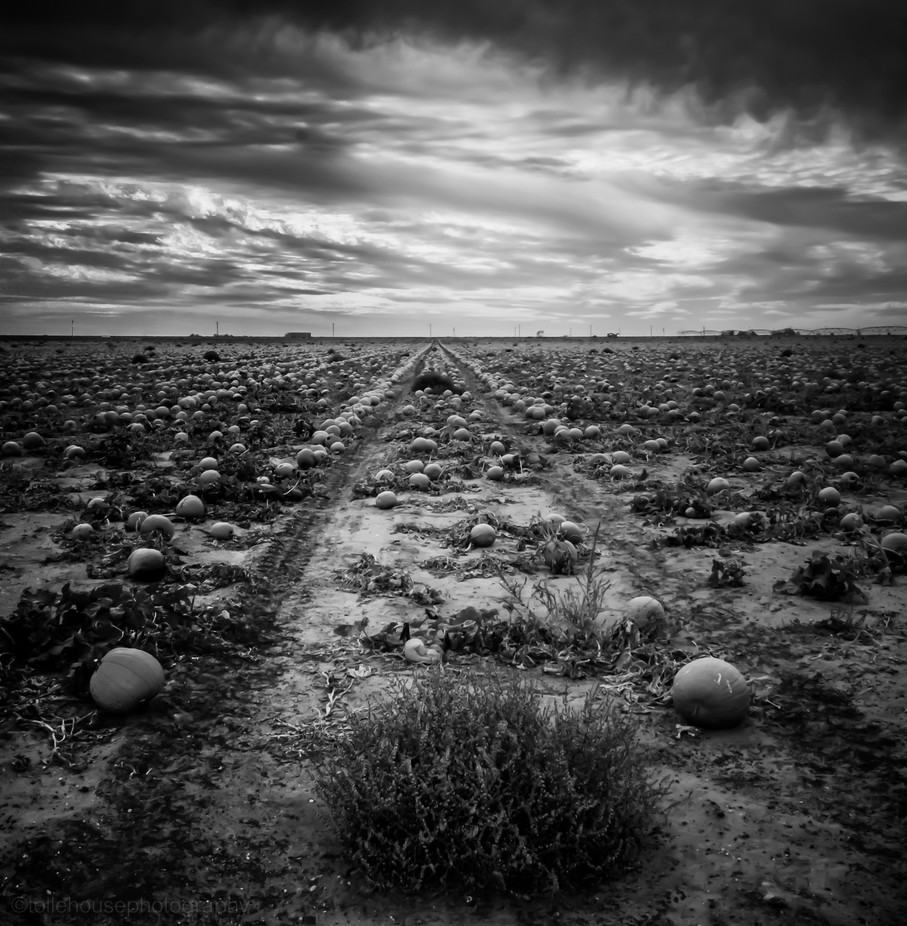 Harvest by lanatolle - Dry Fields Photo Contest