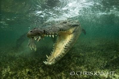 jurassic croc 3