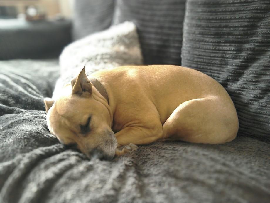Snoozen smudgie my dog