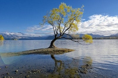 The most Photographed tree in NZ