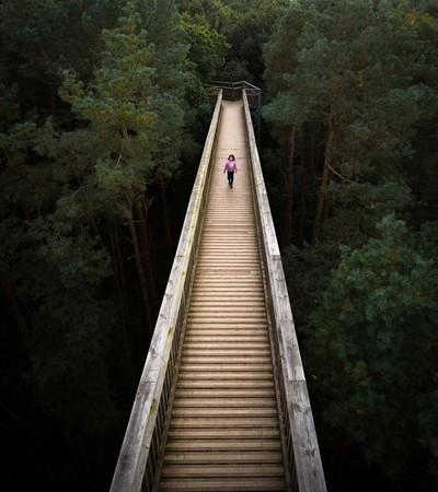 Salcey Forest Walkway