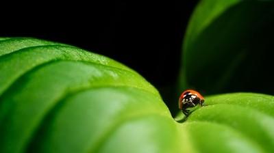Miss Lady Bug