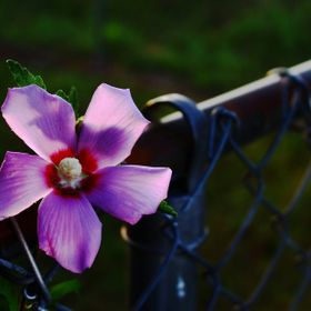 A picture of a flower, taken in the morning.  This shot was very lightly edited to slightly increase the contrast and brightness. However, what y...