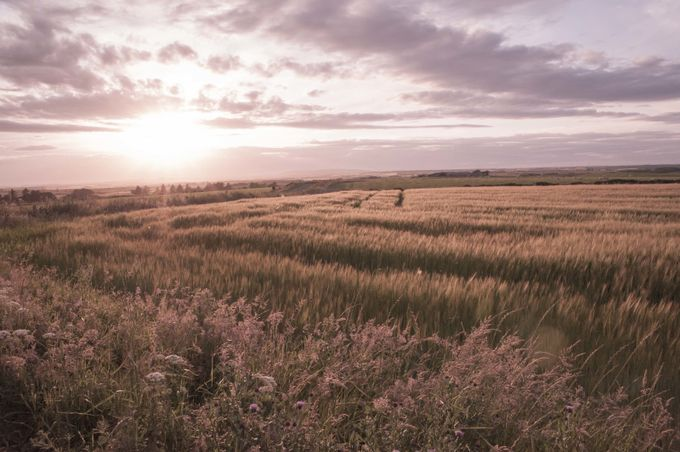 Sun set fields by Wendy-May - Dry Fields Photo Contest