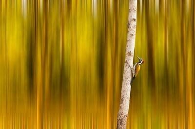 Woodpecker_DSC4475_6