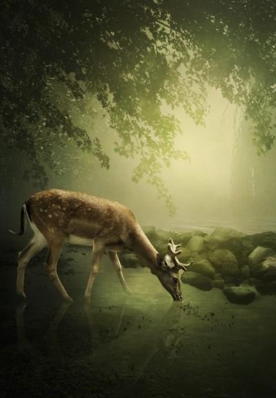 Woodland deer