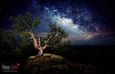 Juniper under the Milky Way (1 of 1)
