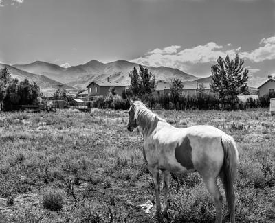a horses behind