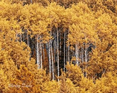 IMG_7854-2 8x10 autumn