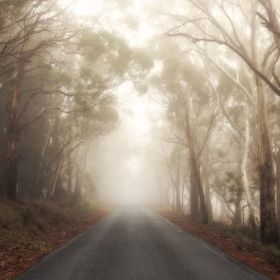 Old Shooters Hill Road, Oberon, NSW in the early morning fog.
