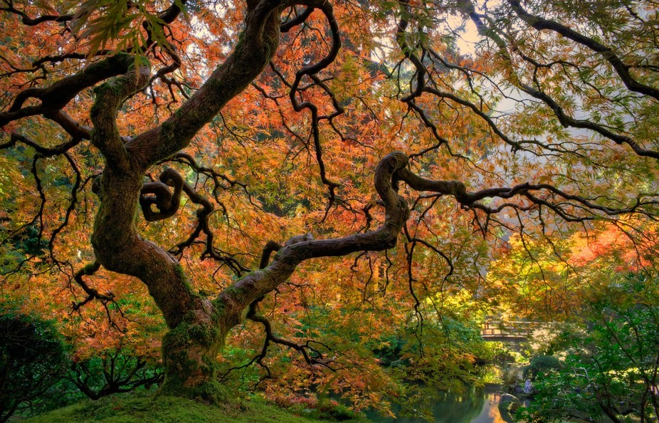 2013.  Portland Japanese Garden, Portland, OR.   We lived in the Portland Metro Area for six year...