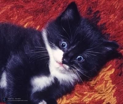 Blue Eyed Mischief