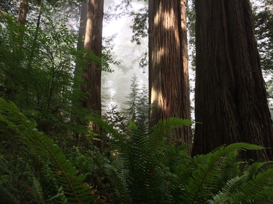 Such a beautiful trail in a Humboldt State Park