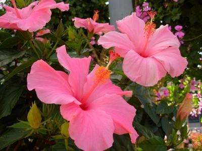 Fabulous Flowers060