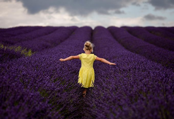 lavender walk by Dominik_Wach - Capture The Back Photo Contest