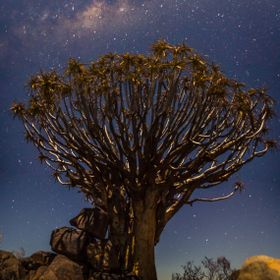 Quiver Tree under the stars in Namibia - Keetmanshoop area