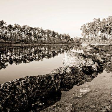 Everglades National Park at sunrise. Miami Coral, Slash Pine, Sabal Palm, Clear Sky. Basic Florida